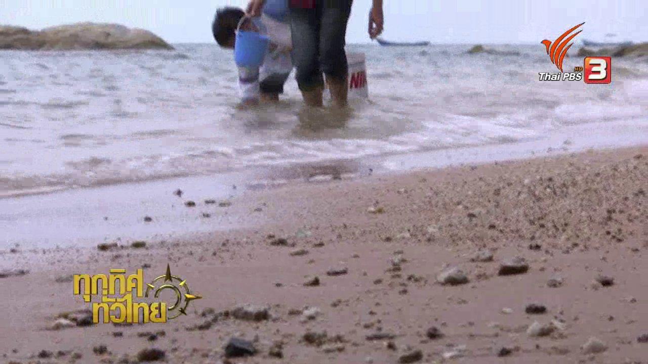 ทุกทิศทั่วไทย - วิถีทั่วไทย : หาหอยตลับที่หาดนาจอมเทียน
