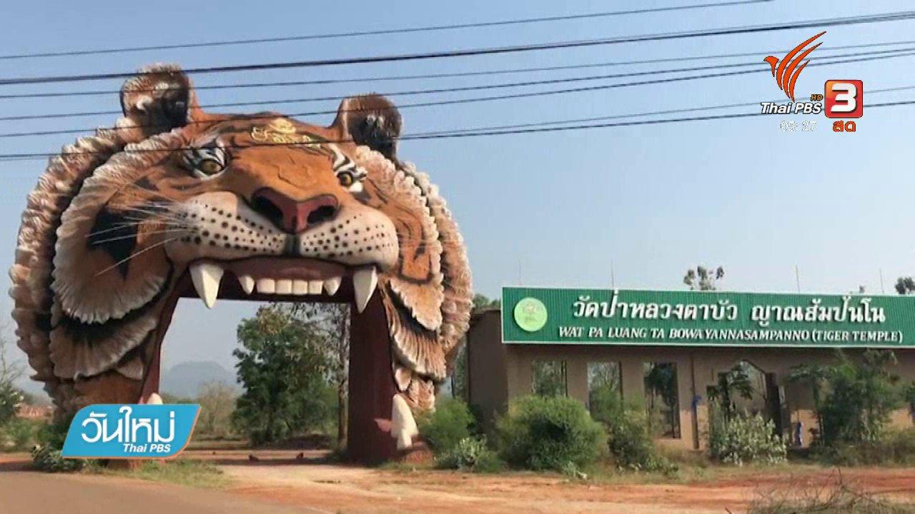 วันใหม่  ไทยพีบีเอส - ผู้ดูแลวัดเสือตั้งใจดูแลสัตว์เต็มที่แม้ขาดอาหาร