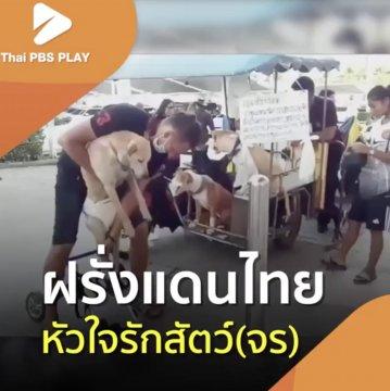 ฝรั่งแดนไทย หัวใจรักสัตว์ (จร)