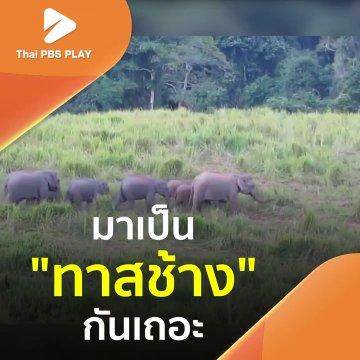 มาเป็นทาสช้างกันเถอะ