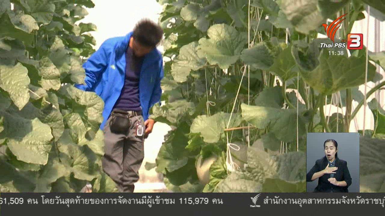 จับตาสถานการณ์ - ตะลุยทั่วไทย : เมล่อน