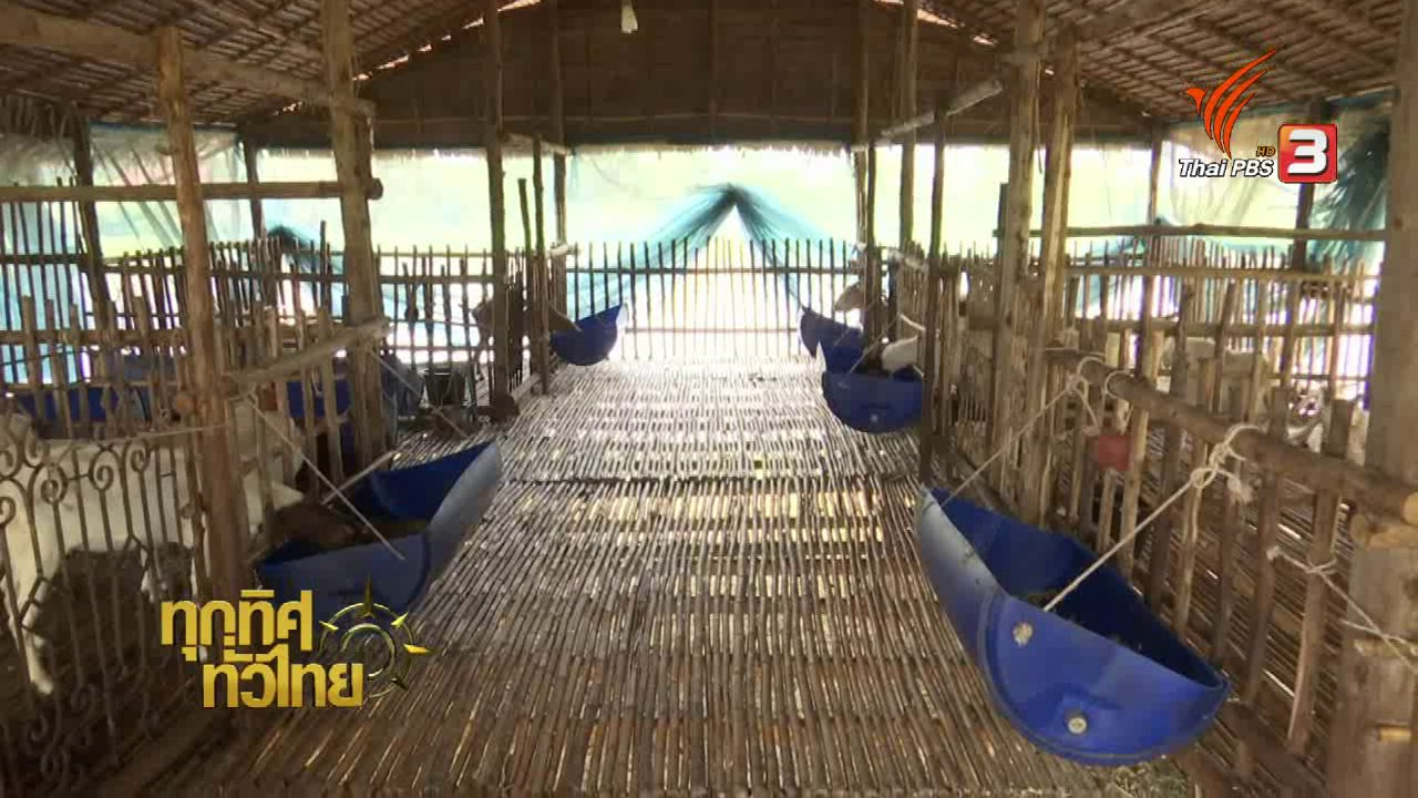 ทุกทิศทั่วไทย - อาชีพทั่วไทย: เกษตรกรรุ่นใหม่เปลี่ยนนาปลูกผักสวนครัวสร้างรายได้เพิ่ม