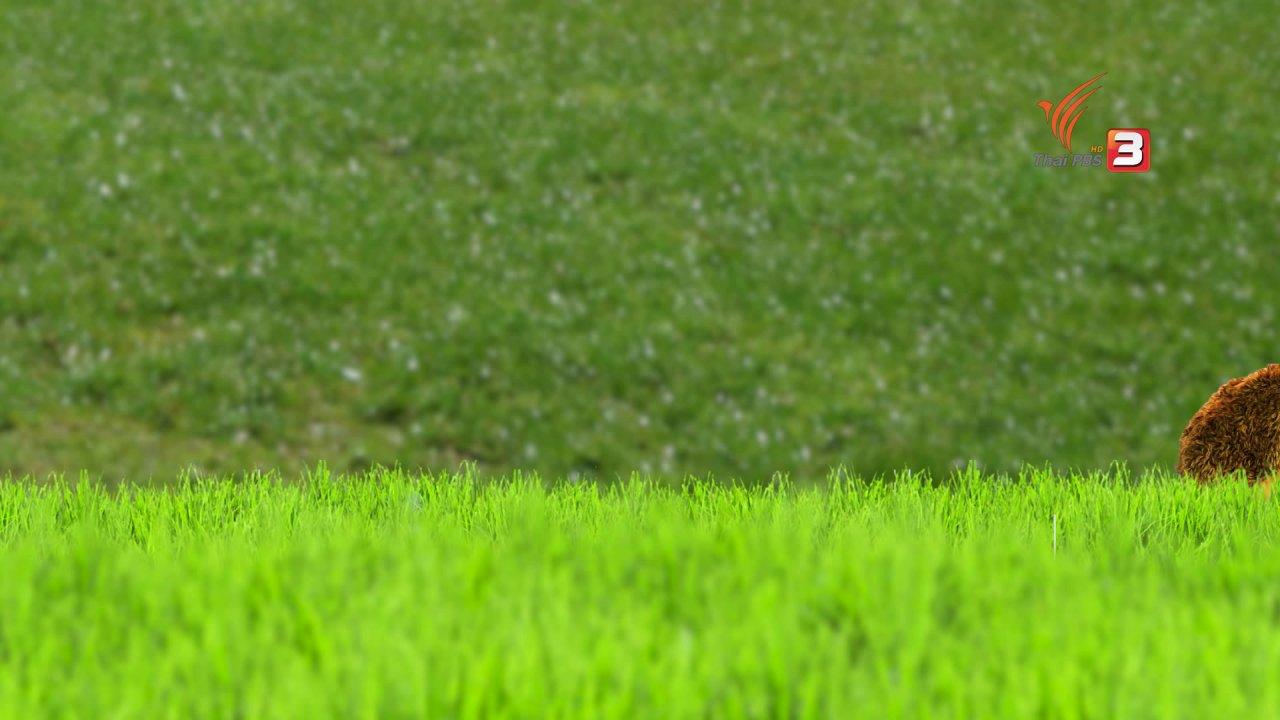 TataTitiToto ไดโนจอมป่วน - เกร็ดน่ารู้กับตาต้าตีตี้โตโต้ : เม่นแคระที่น่ารักน่ารู้จัก