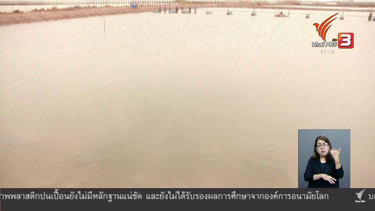จับตาสถานการณ์ - ตะลุยทั่วไทย : สาหร่ายพวงองุ่น