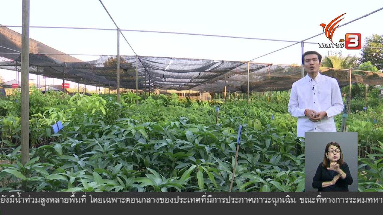 จับตาสถานการณ์ - ตะลุยทั่วไทย : เพาะพันธุ์ไม้