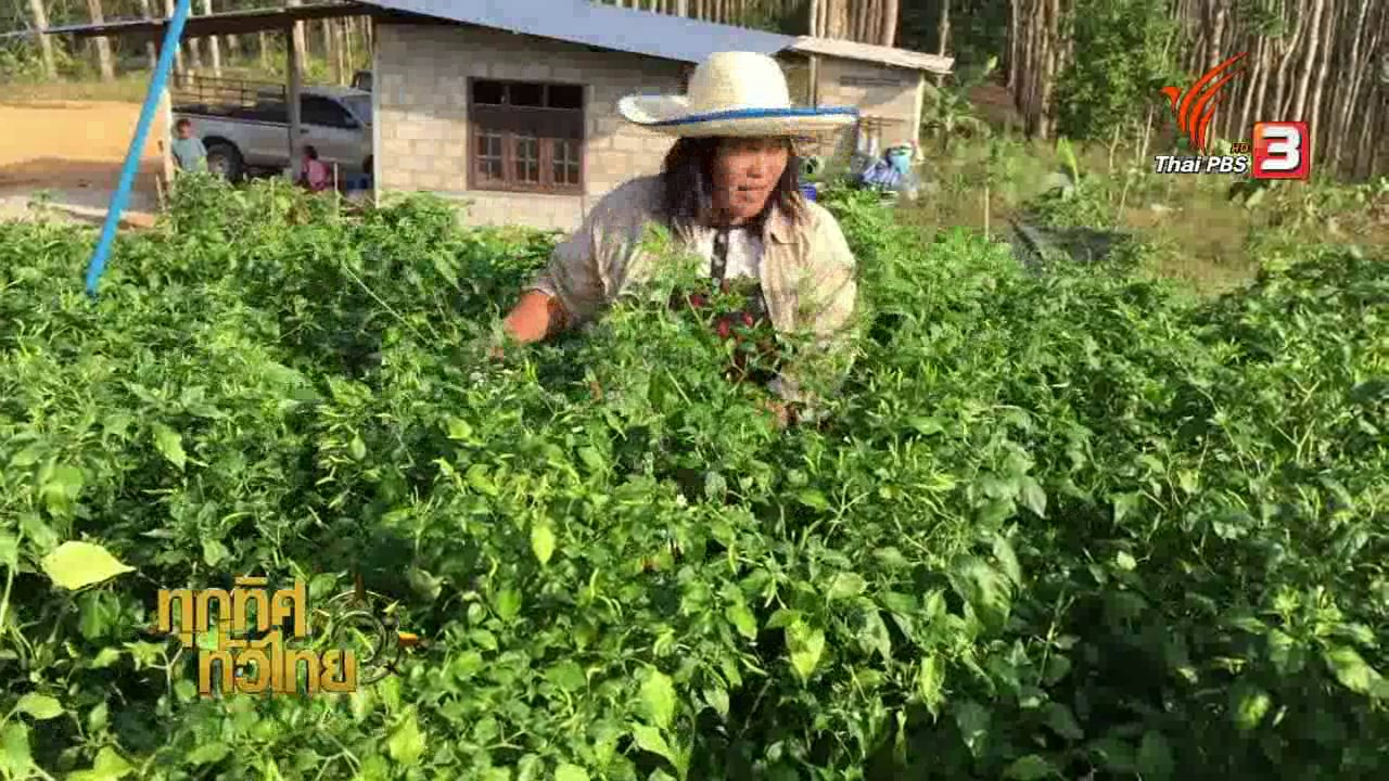 ทุกทิศทั่วไทย - อาชีพทั่วไทย : บ้านนิคมผัง 3 หมู่บ้านต้นแบบตามรอยเท้าพ่อ