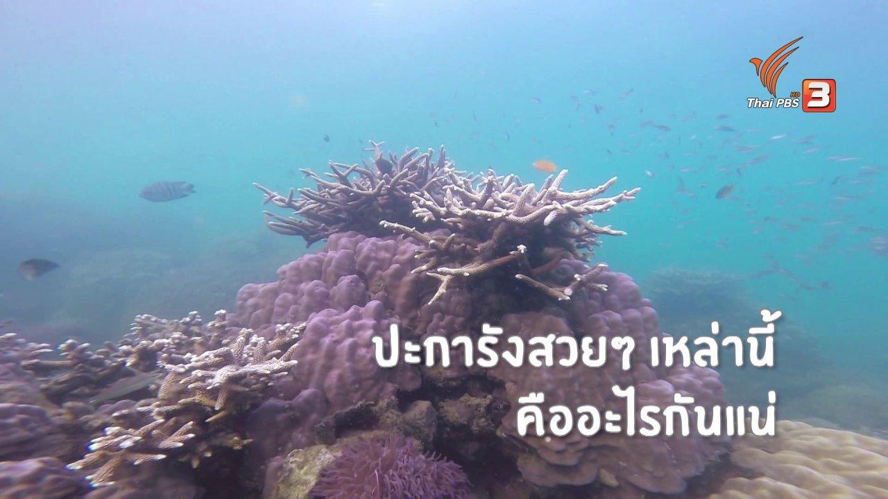 Kid Rangers ปฏิบัติการเด็กช่างคิด - คิดส์เรียนรู้ : ปะการัง