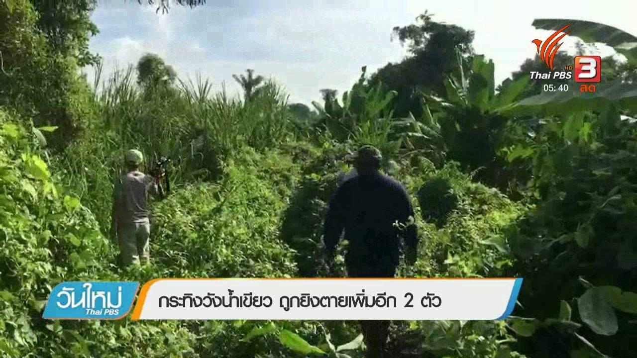 วันใหม่  ไทยพีบีเอส - กระทิงวังน้ำเขียว ถูกยิงตายเพิ่มอีก 2 ตัว
