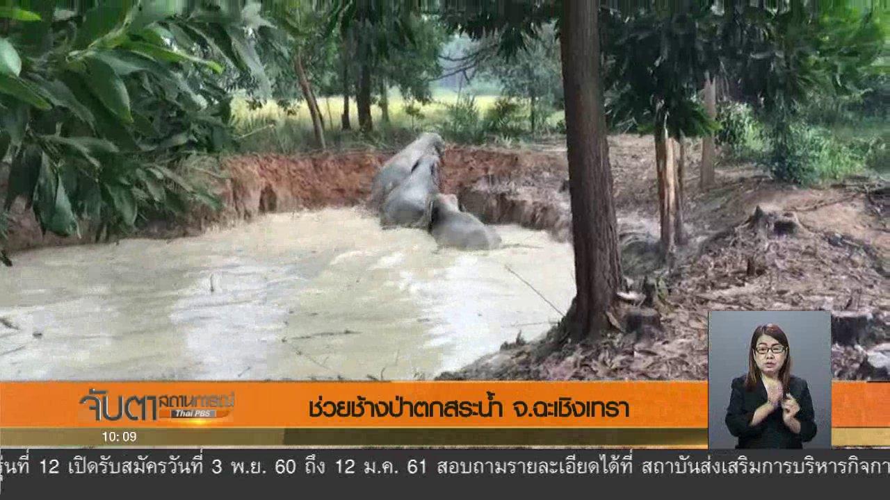 จับตาสถานการณ์ - ช่วยช้างป่าตกสระน้ำ จ.ฉะเชิงเทรา