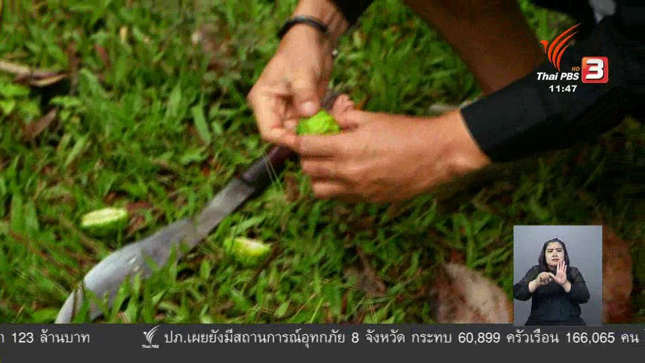 จับตาสถานการณ์ - ตะลุยทั่วไทย : กว่างกอก