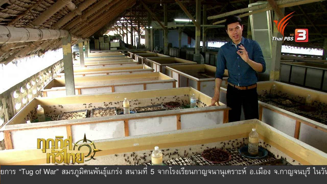 """ทุกทิศทั่วไทย - อาชีพทั่วไทย : """"จิ้งหรีด"""" สัตว์เศรษฐกิจ"""
