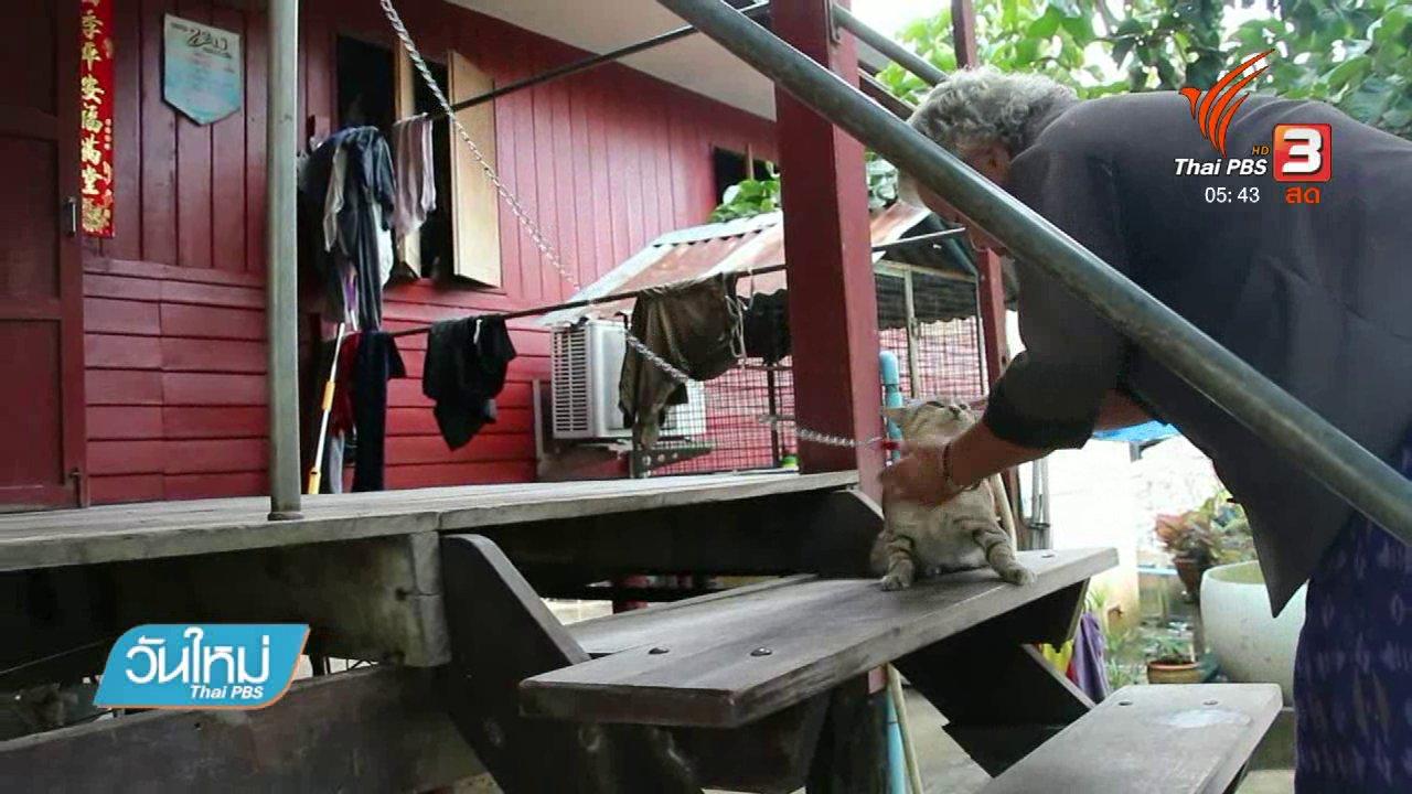 วันใหม่  ไทยพีบีเอส - เลี้ยงแมวไว้เฝ้าบ้านแทนสุนัข จ.ราชบุรี
