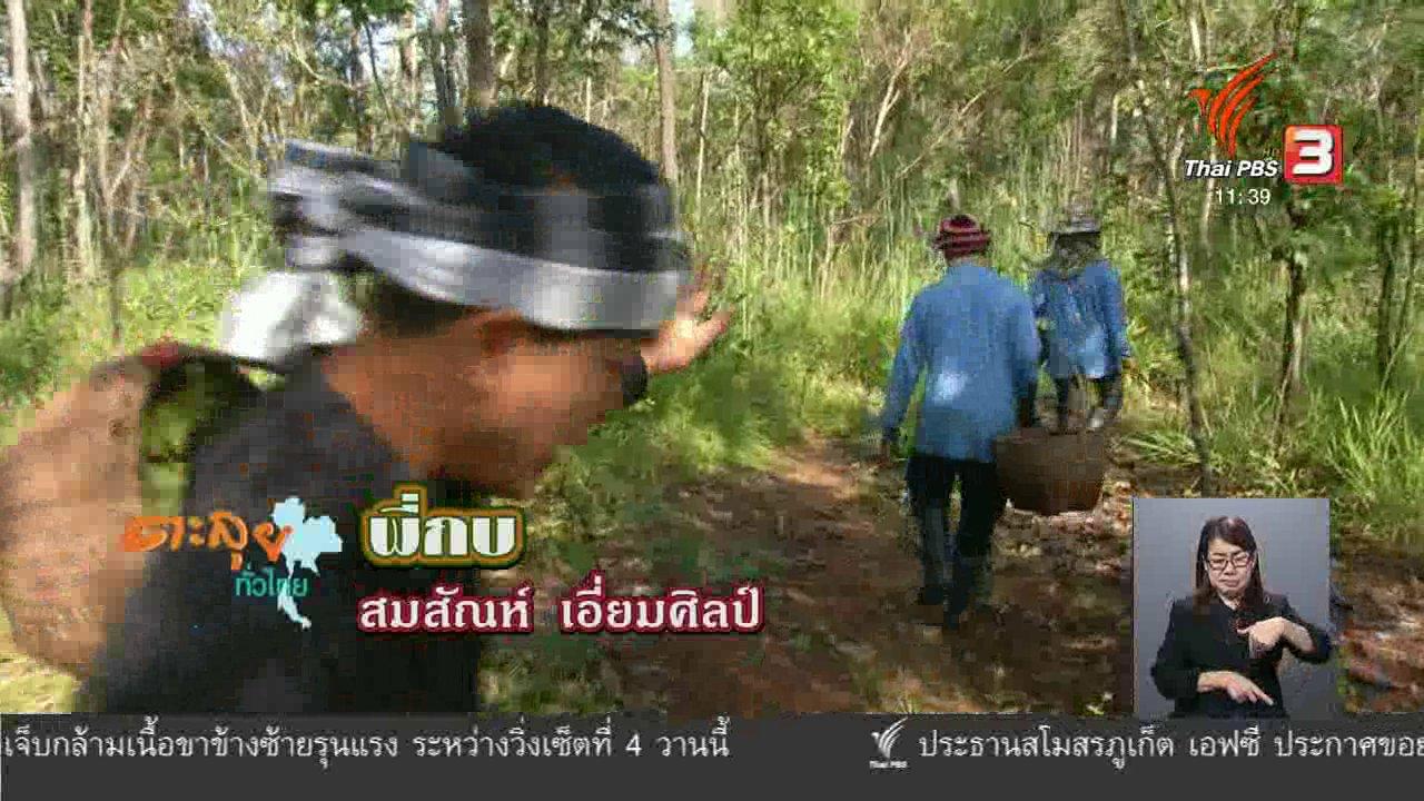 จับตาสถานการณ์ - ตะลุยทั่วไทย : เห็ดหำฟาน