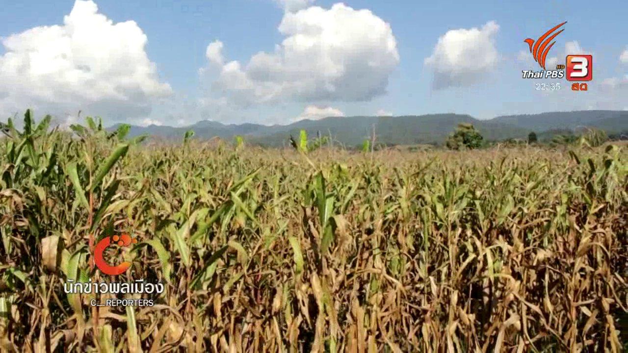 ที่นี่ Thai PBS - นักข่าวพลเมือง : กระเจี๊ยบเขียวสร้างรายได้ ทางเลือกใหม่เกษตรกร