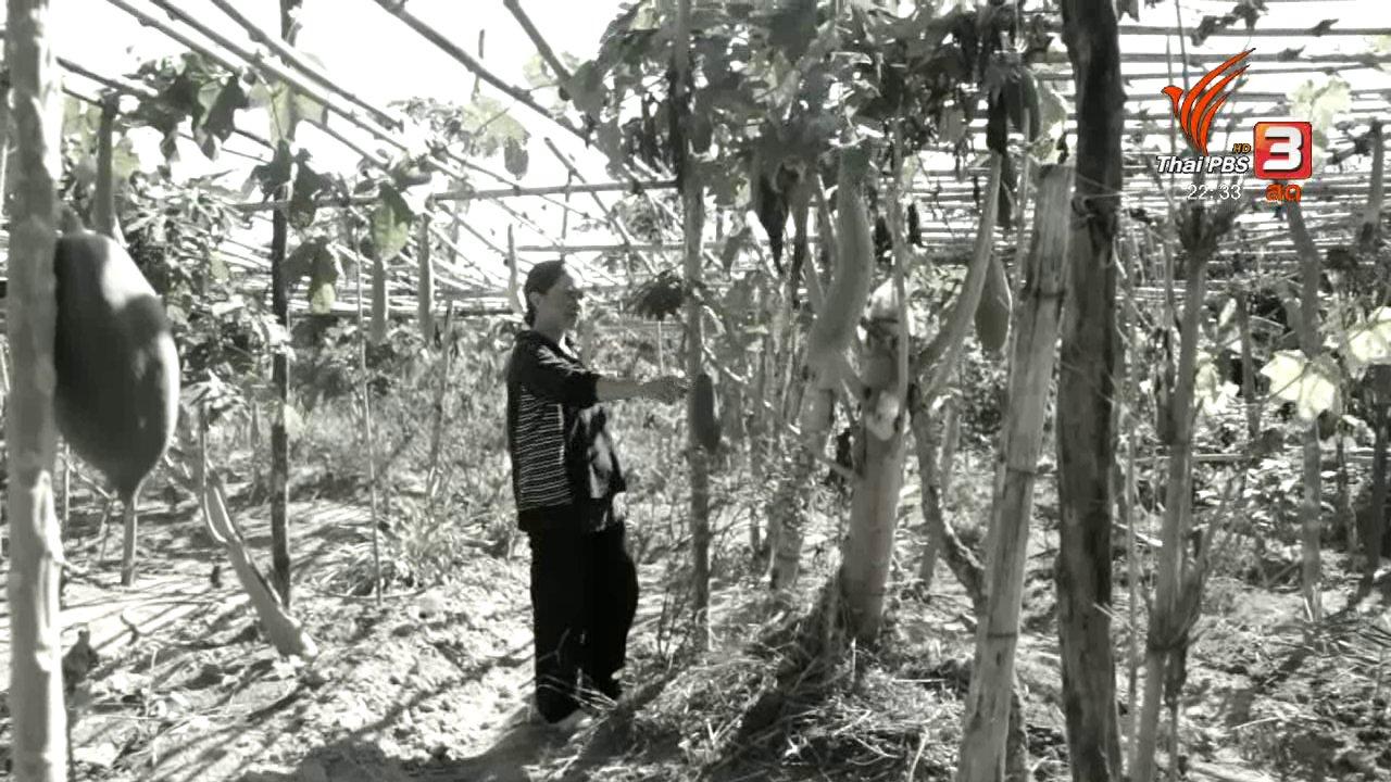 ที่นี่ Thai PBS - นักข่าวพลเมือง : เกษตรทฤษฎีใหม่ คืนชีวิตให้ดิน บ.โคกล่าม-แสงอร่าม
