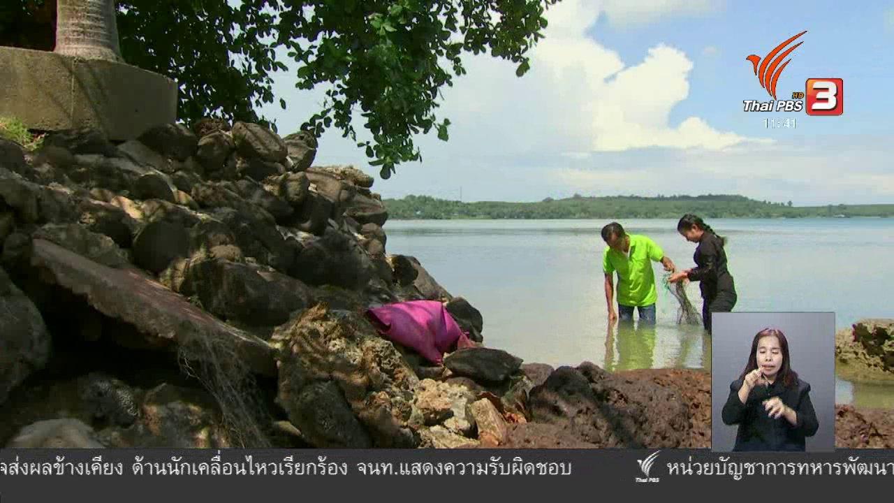 จับตาสถานการณ์ - ตะลุยทั่วไทย : หอยคราง