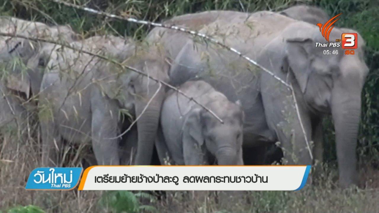 วันใหม่  ไทยพีบีเอส - เตรียมย้ายช้างป่าละอู ลดผลกระทบชาวบ้าน
