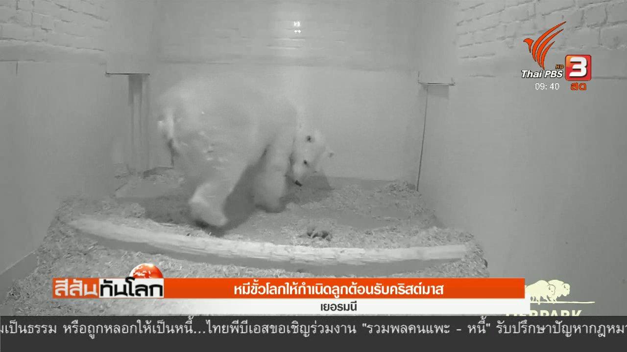 สีสันทันโลก - หมีขั้วโลกให้กำเนิดลูกต้อนรับคริสต์มาส