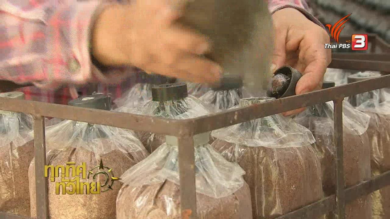 ทุกทิศทั่วไทย - วิถีทั่วไทย : การเพาะเห็ดขอนขาว