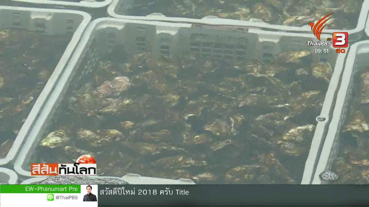 สีสันทันโลก - ฟาร์มเลี้ยงหอยผลิตหอยนางรมรสเลมอน