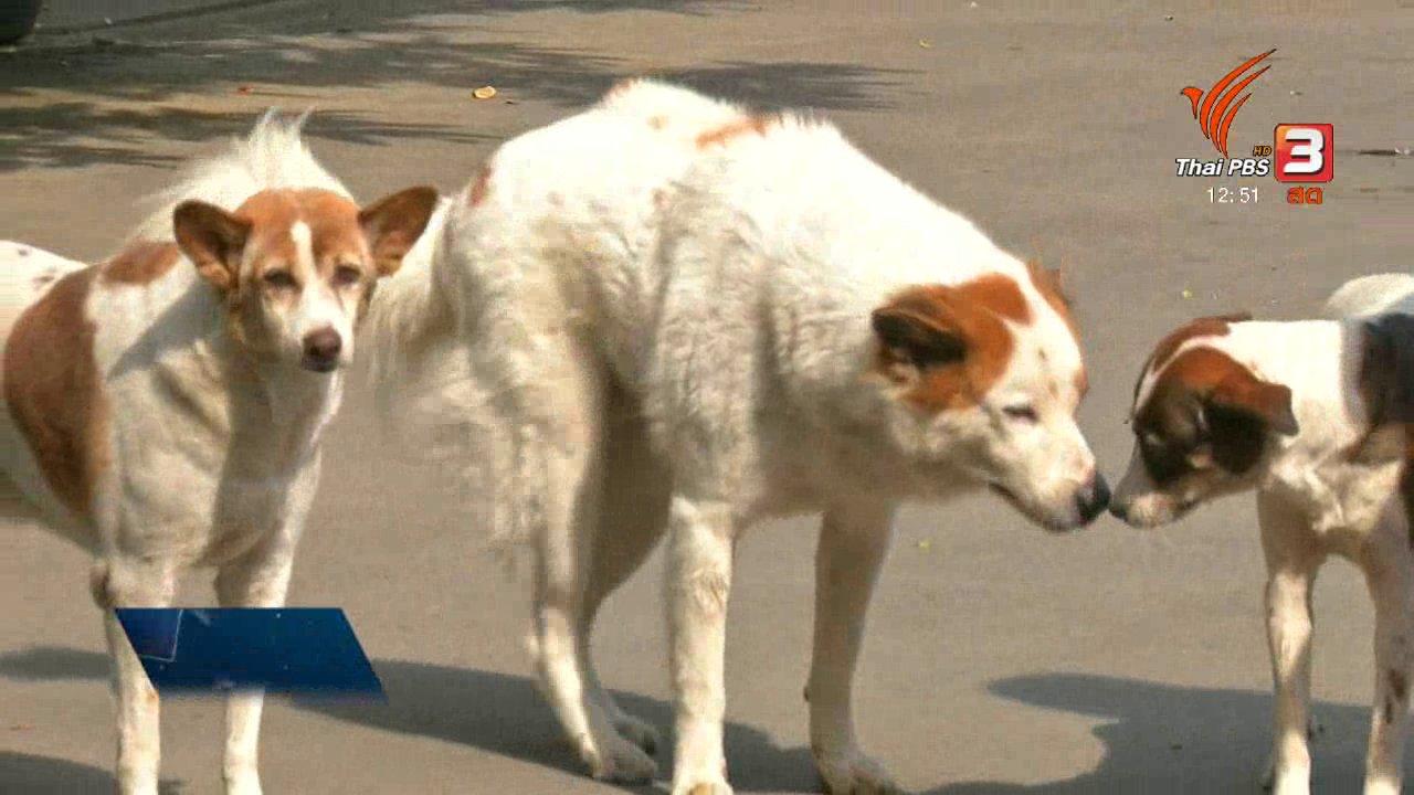 ไทยบันเทิง - เพียงคำเดียว : สำนวนหมา ๆ กับการตีความว่าในทางลบ