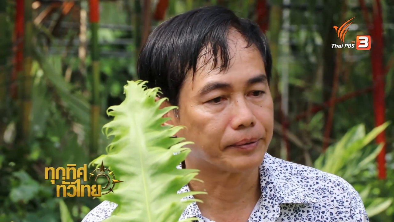 ทุกทิศทั่วไทย - เกษตรกรราชบุรีเพาะเนื้อเยื่อ – พัฒนาสายพันธุ์เฟิร์น ส่งออก