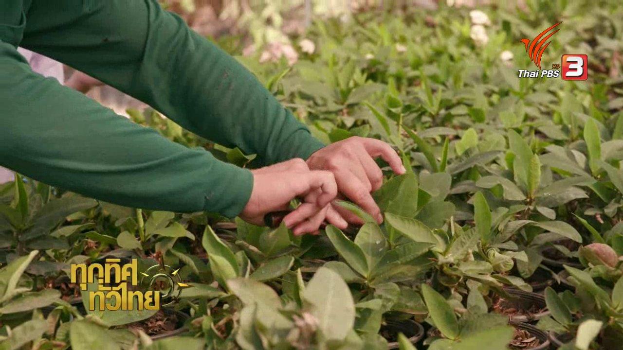 ทุกทิศทั่วไทย - เกษตรกรฉะเชิงเทราเพาะโป๊ยเซียนขายรายได้ดี