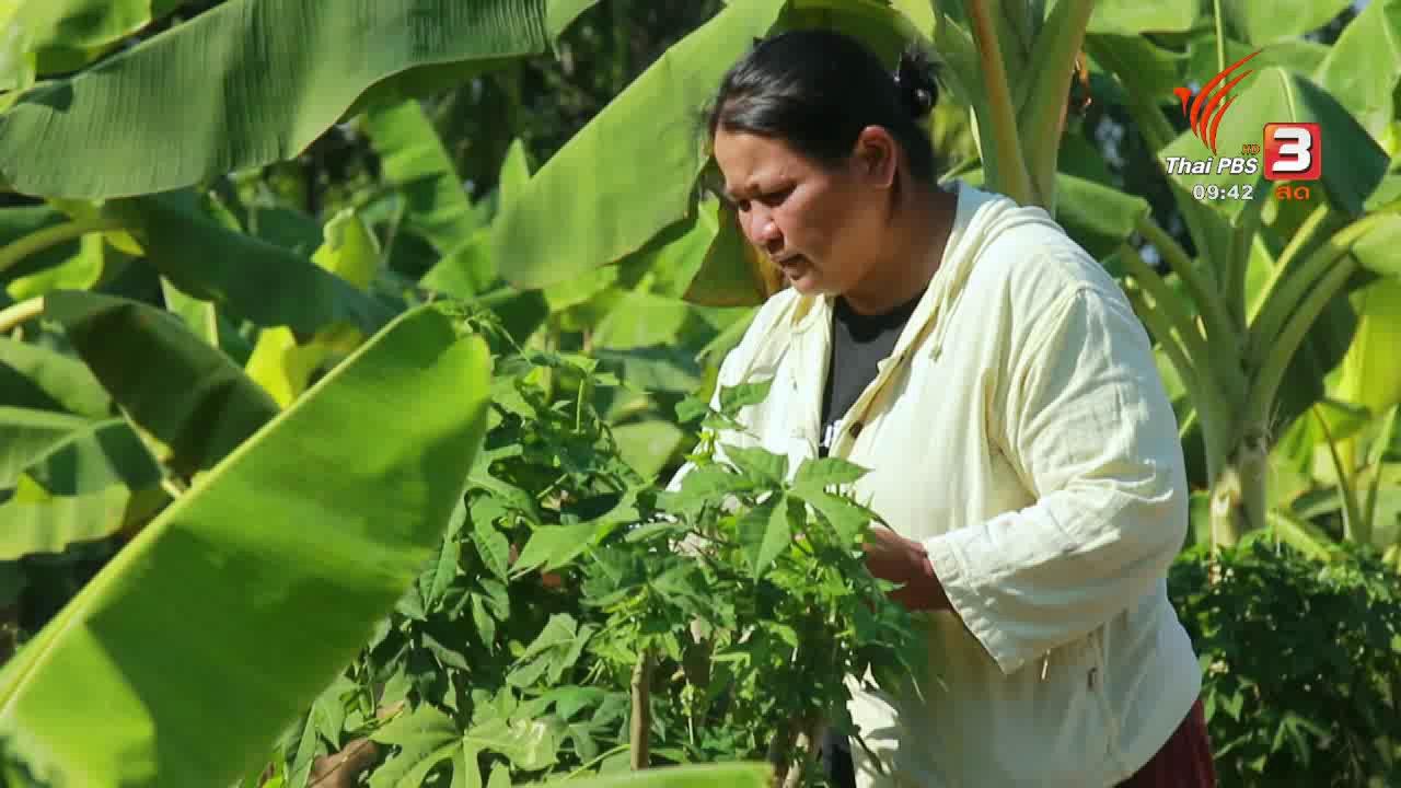 นารีกระจ่าง - เก็บเบี้ยให้ถึงล้าน : เกษตรกรแปรรูป