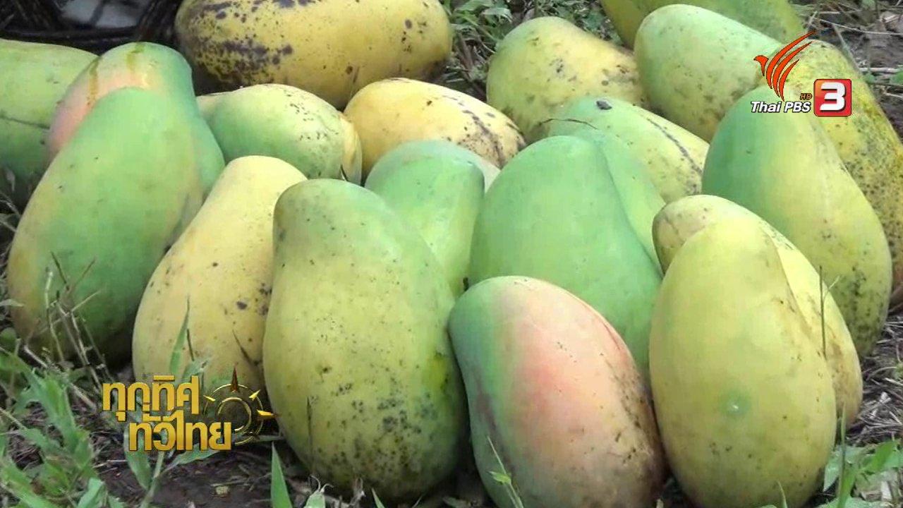ทุกทิศทั่วไทย - อาชีพทั่วไทย: แม่ค้าประจวบฯ นำมะม่วงสุกคาต้นมาทำมะม่วงกวนขาย