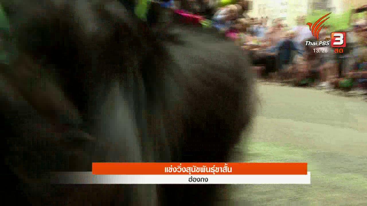 สีสันทันโลก - แข่งวิ่งสุนัขพันธุ์ขาสั้น