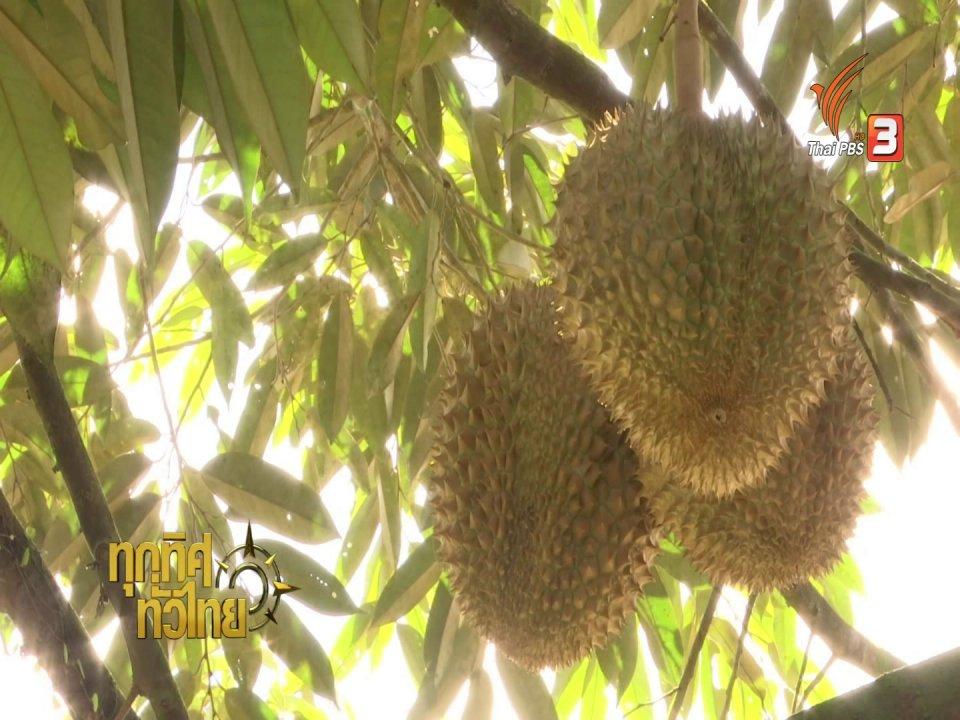 ทุกทิศทั่วไทย - วิถีทั่วไทย : แกงส้มทุเรียนสาลิกา