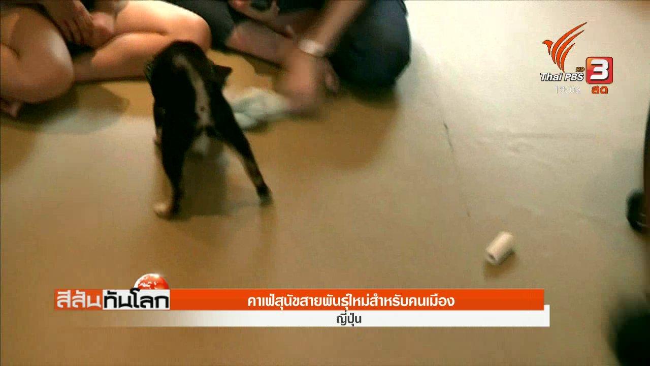 สีสันทันโลก - คาเฟ่สุนัขสายพันธุ์ใหม่สำหรับคนเมือง