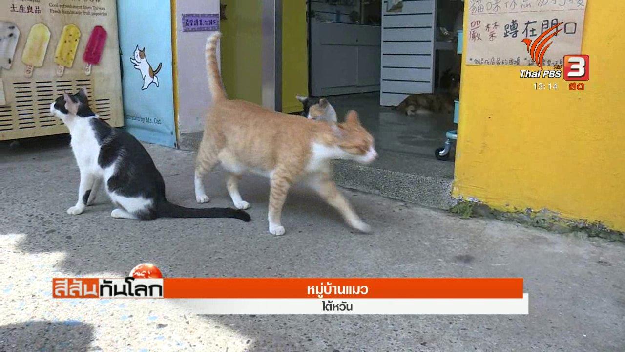 สีสันทันโลก - หมู่บ้านแมว