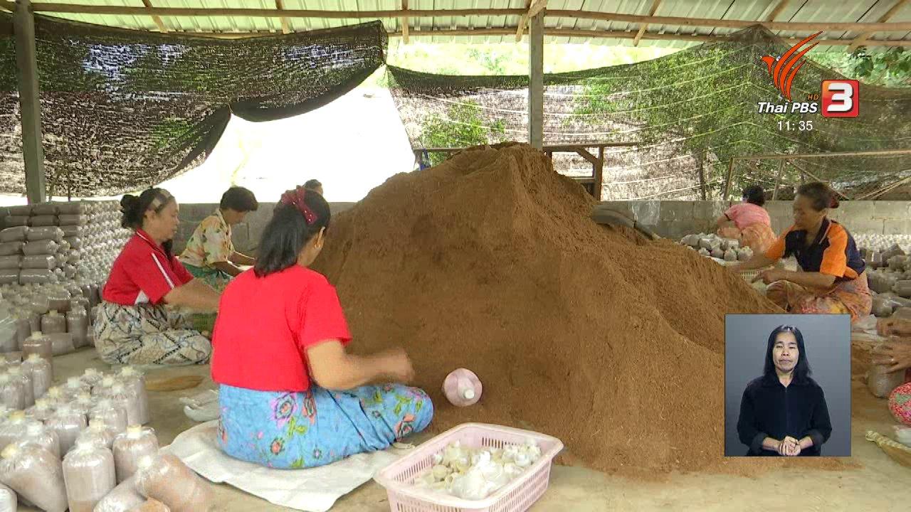 จับตาสถานการณ์ - ตะลุยทั่วไทย : เห็ดหอม