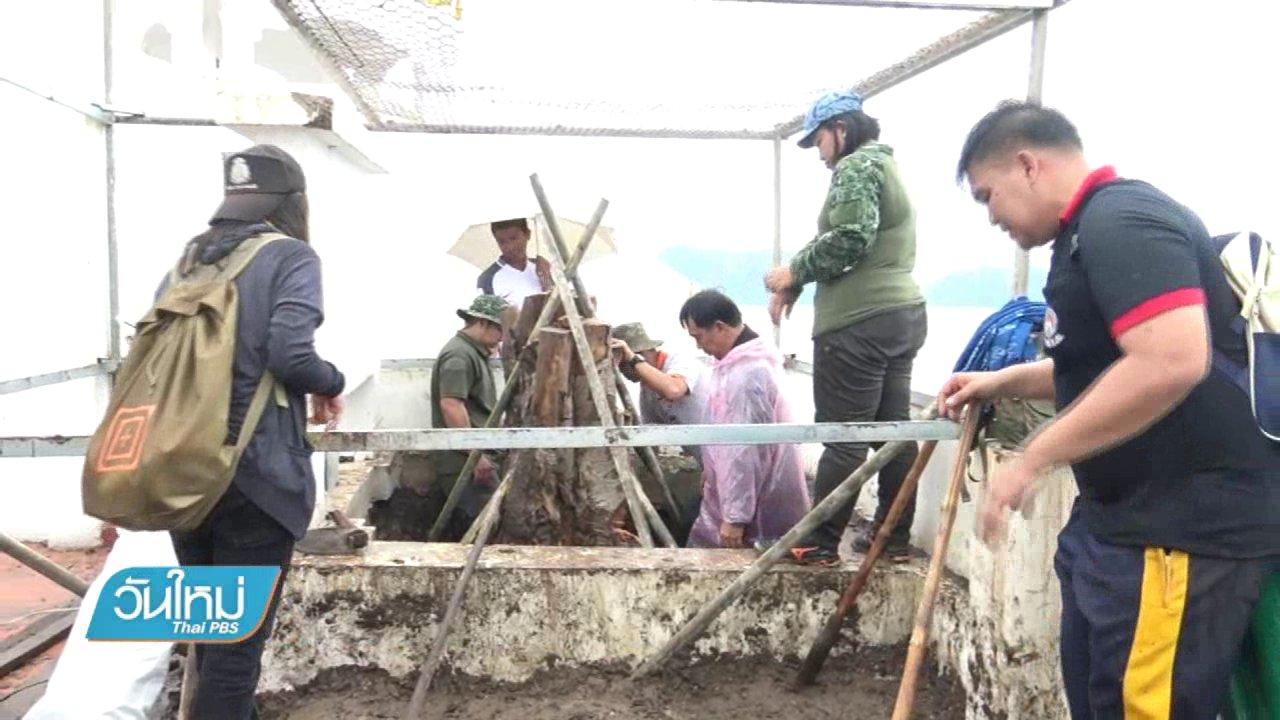 วันใหม่  ไทยพีบีเอส - หาแนวทางฟื้นฟูต้นพระศรีมหาโพธิ์ ร.9