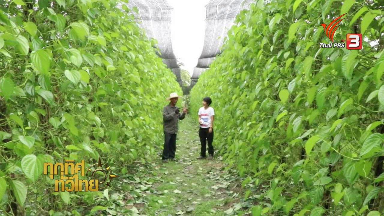 ทุกทิศทั่วไทย - วิถีทั่วไทย: เกษตรกรราชบุรีหันมาปลูกพลูขาย