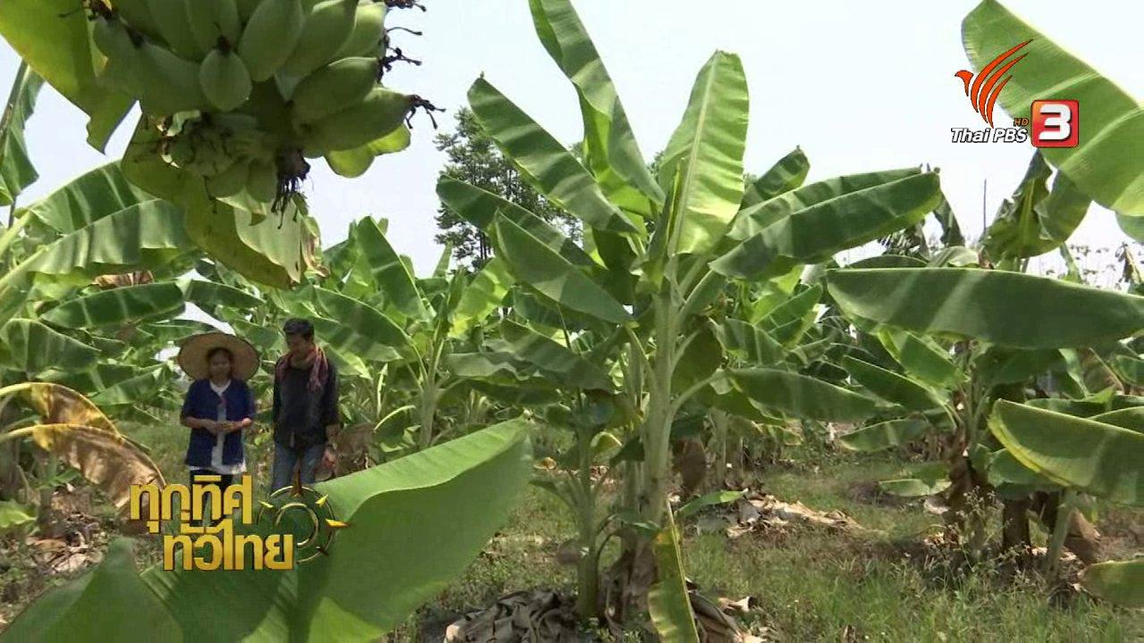 ทุกทิศทั่วไทย - อาชีพทั่วไทย: อดีตสาวออฟฟิศหันมาทำเกษตรที่บ้านเกิด จ.กำแพงเพชร