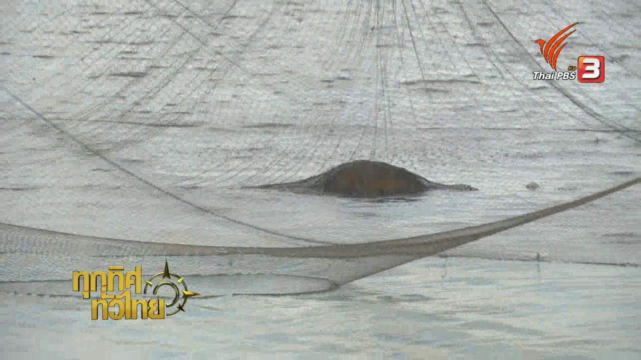 ทุกทิศทั่วไทย - วิถีทั่วไทย : ชวนหาปลาอ่างเก็บน้ำเขื่อนลำปาว