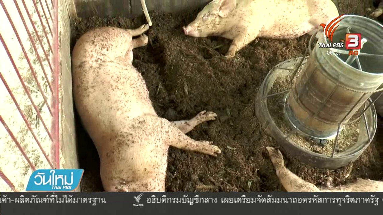 วันใหม่  ไทยพีบีเอส - ปศุสัตว์จังหวัดนครราชสีมา วอนอย่าตื่นตระหนกข่าวหมูติดพิษสุนัขบ้า