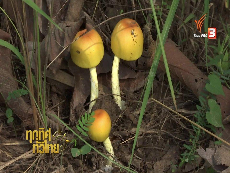 ทุกทิศทั่วไทย - อาชีพทั่วไทย : ชาวขอนแก่นปลูกป่าเพาะเห็ดป่า