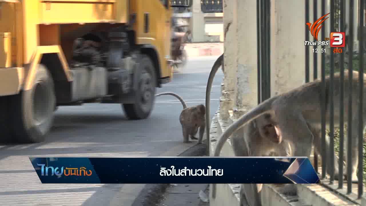 ไทยบันเทิง - เพียงคำเดียว : ลิงในสำนวนไทย