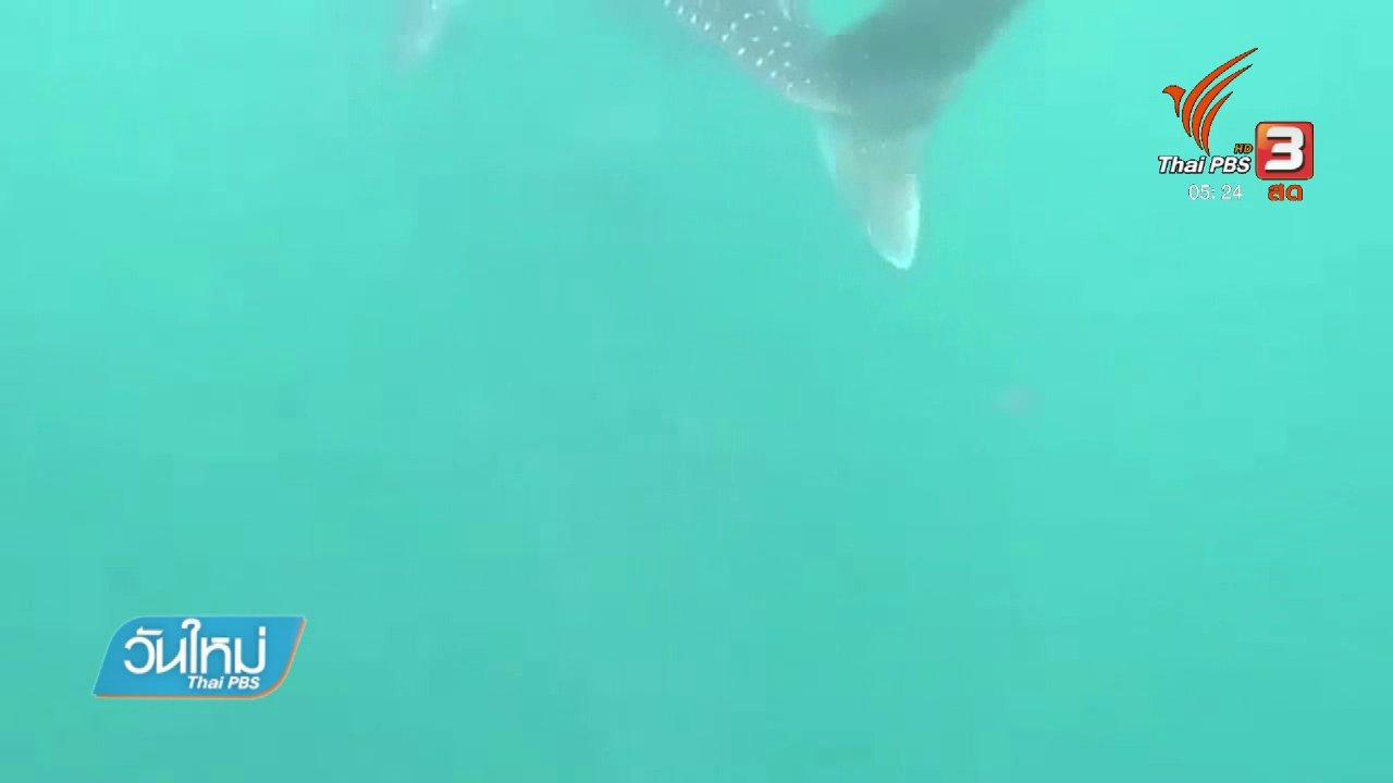 วันใหม่  ไทยพีบีเอส - นักท่องเที่ยวยอมรับผิดคลิปขี่ฉลามวาฬ