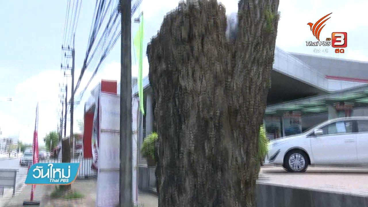 วันใหม่  ไทยพีบีเอส - เตรียมแจ้งความเอาผิดคนตัดไม้ริมถนนเชียงราย