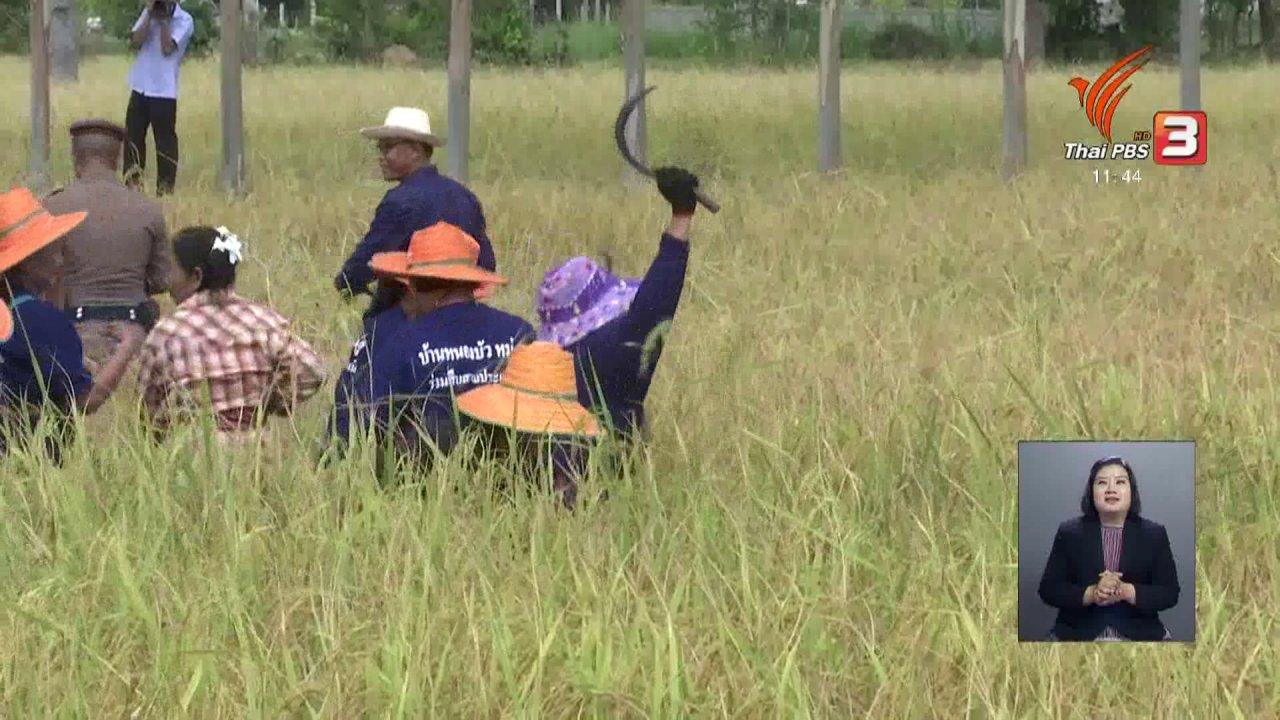 จับตาสถานการณ์ - ตะลุยทั่วไทย : วันข้าวสารโลก