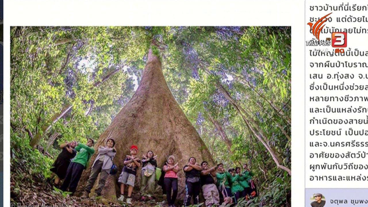 วันใหม่  ไทยพีบีเอส - C-site Report : อวดต้นไม้ ใกล้ตัวคุณ