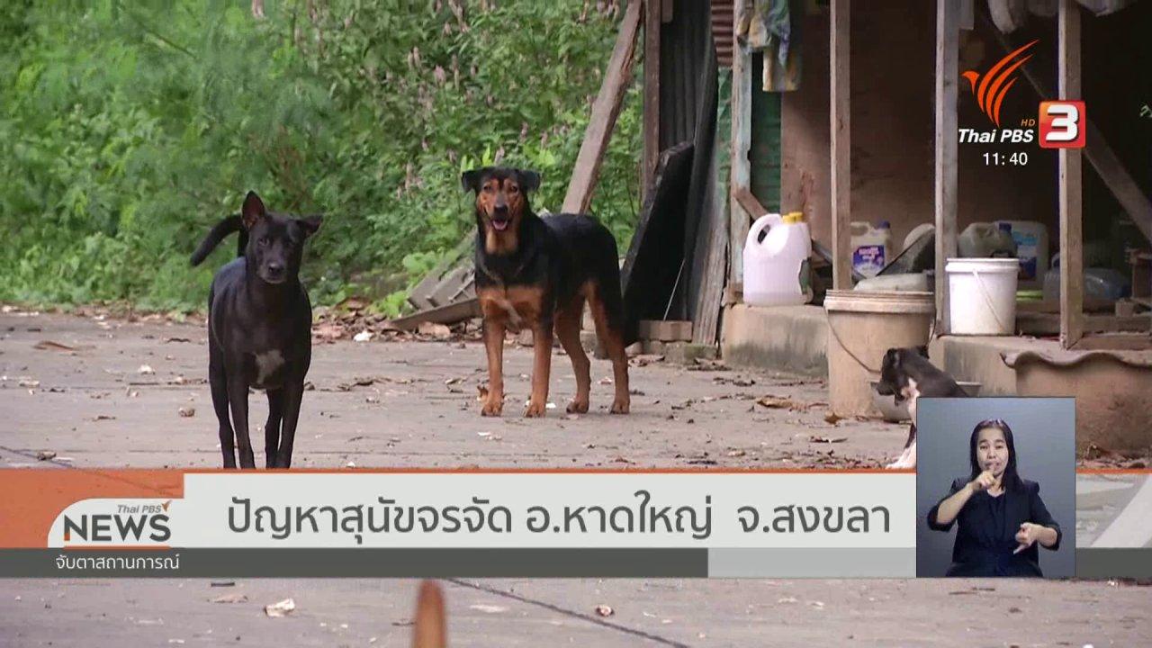 จับตาสถานการณ์ - ปัญหาสุนัขจรจัด อ.หาดใหญ่ จ.สงขลา