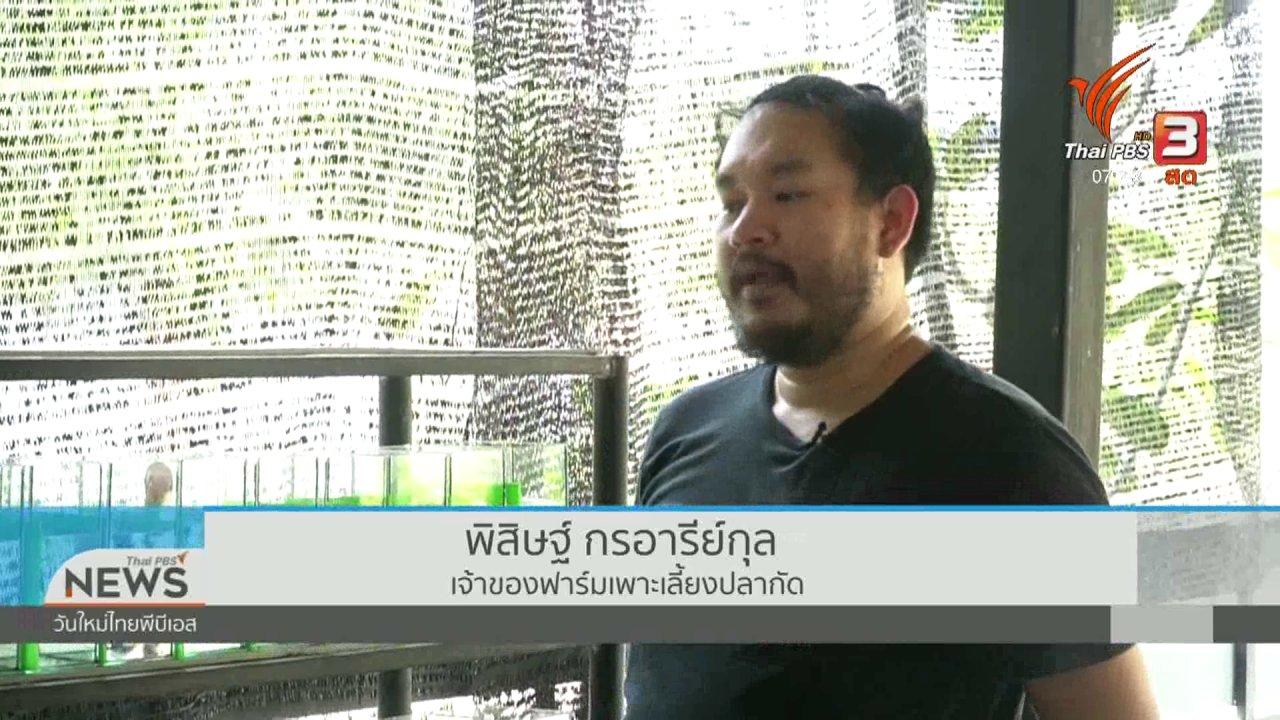 """วันใหม่  ไทยพีบีเอส - ปากท้องต้องรู้ : """"ปลากัดไทย"""" ขาดตลาด โอกาสผู้เลี้ยงรายย่อย"""