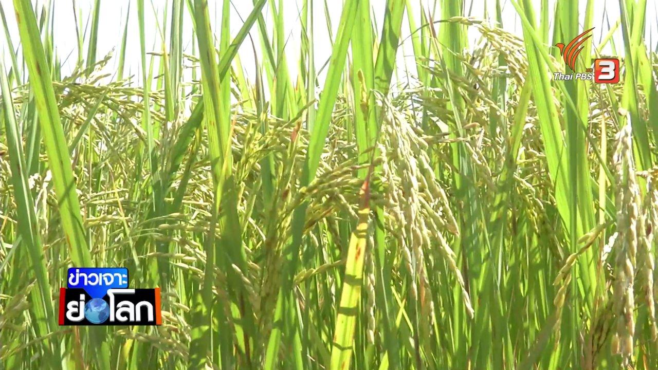 ข่าวเจาะย่อโลก - ร่าง พ.ร.บ.ข้าว ผูกขาดการรับรองพันธุ์ นักเศรษฐศาสตร์การเกษตรมอง ไม่ยั่งยืน