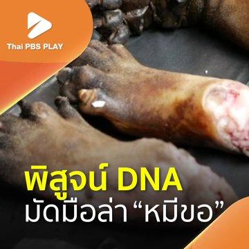 พิสูจน์ DNA มัดมือล่าหมีขอ
