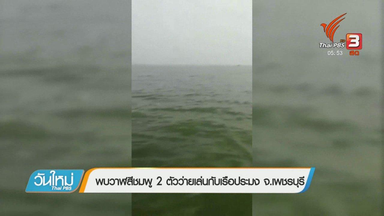 วันใหม่  ไทยพีบีเอส - พบวาฬสีชมพู 2 ตัวว่ายเล่นกับเรือประมง จ.เพชรบุรี